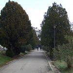 Servizi cimiteriali, il 12 dicembre termine di pagamento per le lampade votive