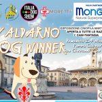 """""""VALDARNO DOG WINNER"""" DOMENICA 24 MARZO 2019"""