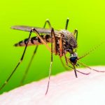 Lotta alle zanzare: nella notte fra il 19 e 20 agosto la disinfestazione notturna
